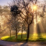 nature-spring-morning