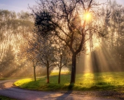 nature-spring-morning1