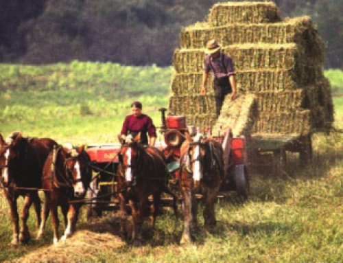 Amish Harvest Season – God's Goodness