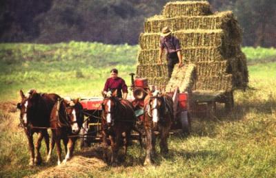 Amish Harvest Season – God's Goodness